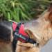 Image 5 - Harnais d'éducation Multisport Kn'1 Active Speed-Control pour chien