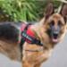 Image 6 - Harnais d'éducation Multisport Kn'1 Active Speed-Control pour chien