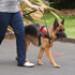 Image 7 - Harnais d'éducation Multisport Kn'1 Active Speed-Control pour chien