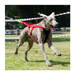 Image 4 - Harnais Neewa Racing H-Back pour sport de trait avec chien