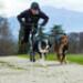 Image 5 - Harnais Neewa Racing H-Back pour sport de trait avec chien