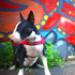 Image 7 - Harnais Norvégien Ezydog Quick Fit pour chien