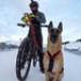 Image 14 - Harnais X-Back Kn'1 Powerful™ pour canicross, bikejoring et skijoring avec chien