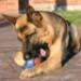 Image 3 - Jeu friandise Everlasting très résistant pour chien
