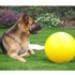 Image 6 - Jolly Ball Push-N-Play jeu de boule pour chien