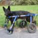 Image 4 - Kit-Front déambulateur Canis-Cart Liberty® pour chien handicapé ou paralysé