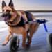 Image 5 - Kit-Front déambulateur Canis-Cart Liberty® pour chien handicapé ou paralysé