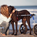Image 6 - Kit-Front déambulateur Canis-Cart Liberty® pour chien handicapé ou paralysé