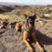 Image 7 - Lunette masque oculaire thérapeutique pour chien Rex-Specs K9