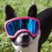 Image 12 - Lunette masque oculaire thérapeutique pour chien Rex-Specs K9