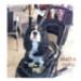 Image 5 - Poussette Globetrotter pour petit chien et chat