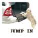 Image 1 - Protection pare choc de voiture Jumpin pour chien