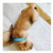 Image 3 - Ruban d'identification Pupcolors pour chiot - Lot de 12