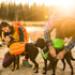 Image 4 - Sac de bât sac à dos Pro Approach Pack pour chien