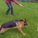 Image 3 - Tige télescopique Reizangel avec leurre à mordre pour chien