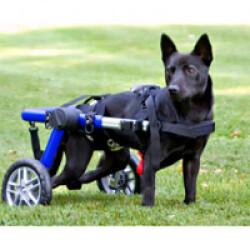 Chambre à air supplémentaire 16 pouces pour Canis-Cart Liberty taille 5 à l'unité