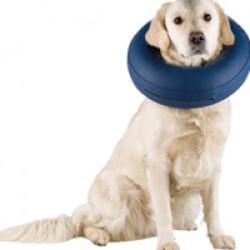 Collier de protection gonflable pour chien Taille XXS