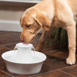 Fontaine Petsafe Drinkwell céramique Avalon pour chien et chat