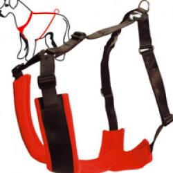 Harnais réglable TH I-BACK Kn'1® T1 chien 15 à 25 kg