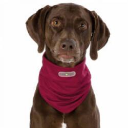 Tour de cou bordeaux antiparasitaires pour chien Insect Shield S