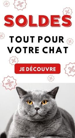 Soldes hiver chat