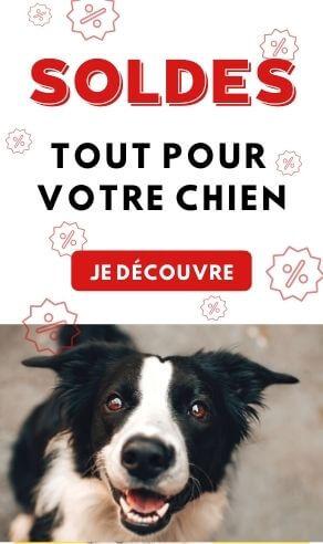 Soldes chien Hiver 2021